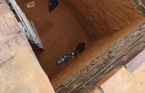 Bei der Rettung einer Katze aus einer Grube ist etwas schief gegangen
