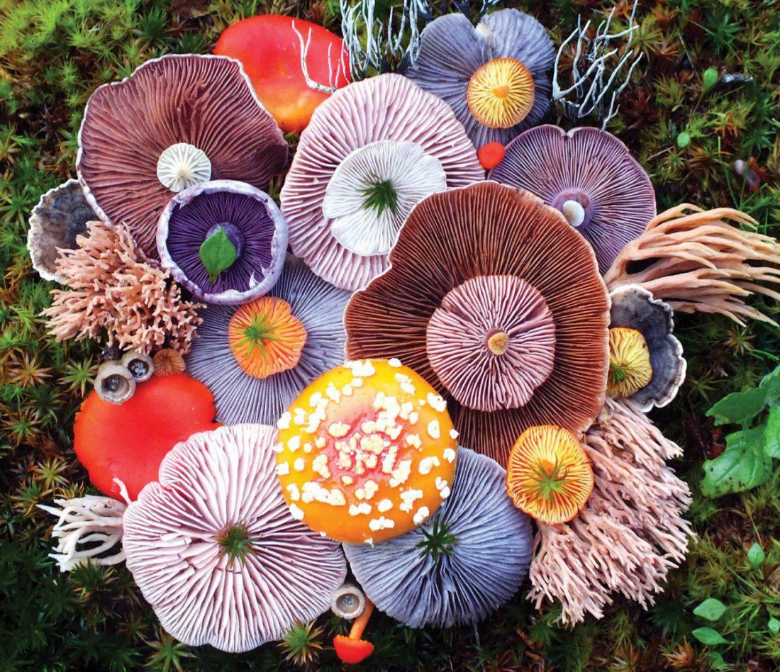 Erstaunliche Kompositionen aus Pilzen