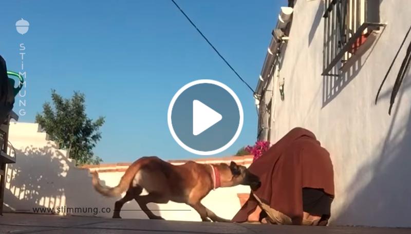 Als der Hund verstand, dass sich sein Besitzer unter einer Decke versteckt hat, war er außer sich vor Glück!