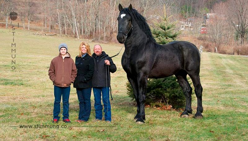 Die schönsten Pferderassen! Sie sind ja einfach Fantastisch!