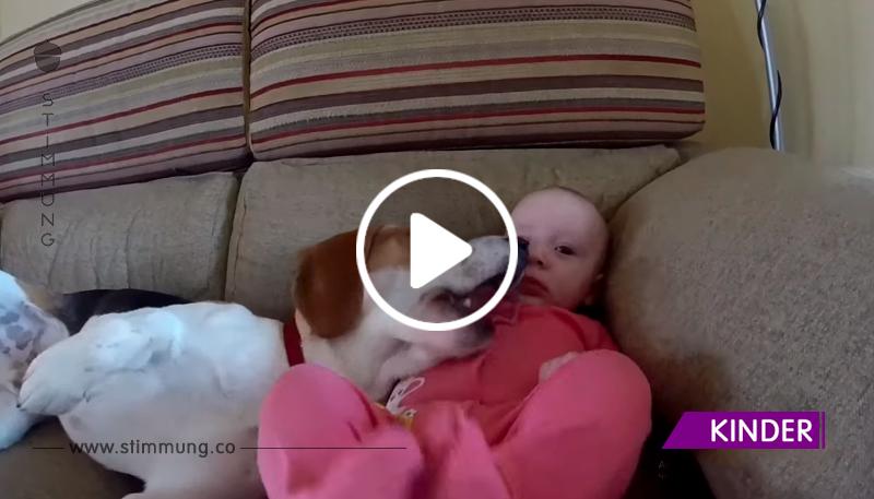 Als ein Kind im Haus erschien, hat sich der Hund viel geändert. Aber niemand hat es ihm beigebracht!