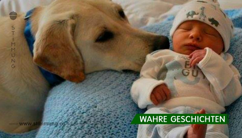 Verärgerter Hund lief zu dem Baby, Eltern betraten den Raum und wurden auf einmal sprachlos
