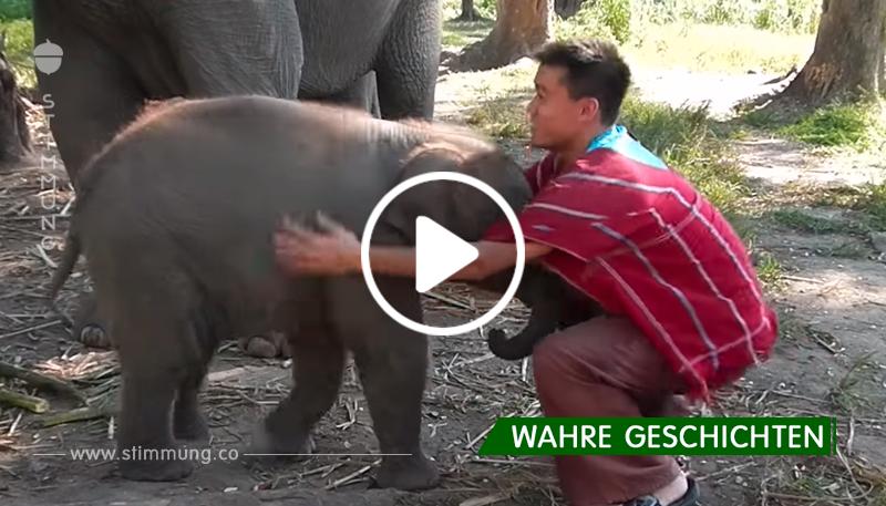 Dieser Typ beschloss, einen Elefantenbaby zu umarmen. Die Reaktion des Babys ist nur ein Wunder!