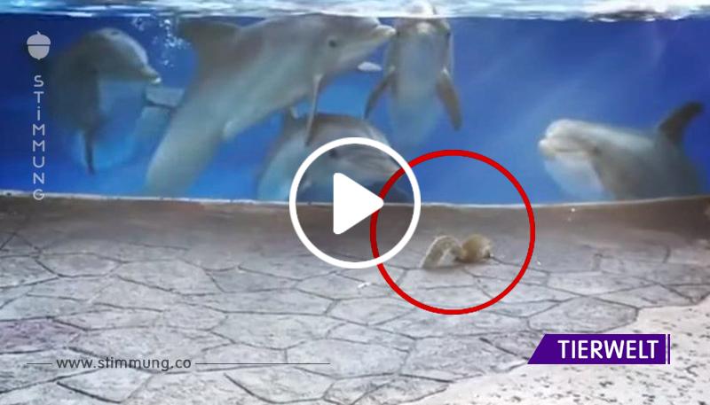 EIn Wunder im Zoo! Delfine trafen sich zuerst mit Eichhörnchen. Schau dir nur die Reaktion der Tiere an!