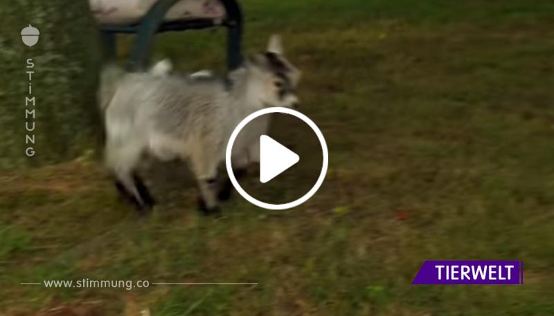 Dieser Welpe lief zu der kleinen Ziege. Was als nächstes passiert, ist unglaublich!