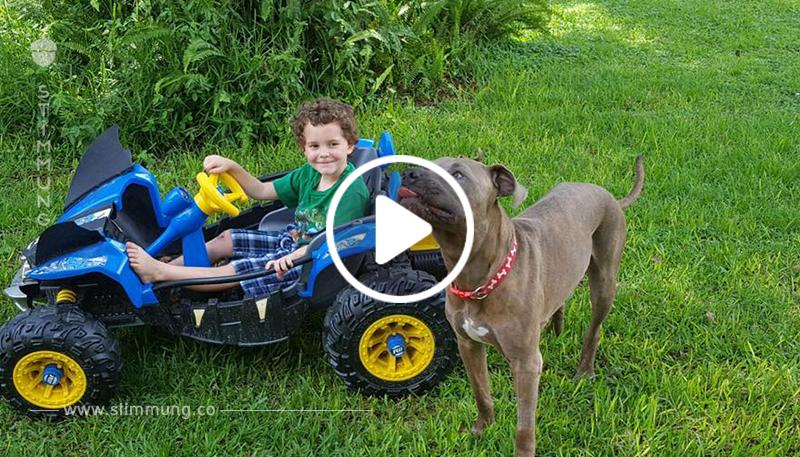 Die Kinder spielten mit zwei Pitbulls im Hinterhof. Plötzlich hörte ihre Großmutter Schreie ...