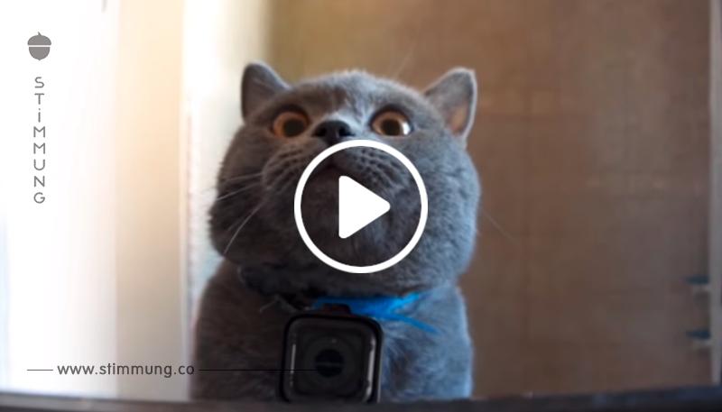 Der Besitzer hat eine Videokamera an den CAT-Kragen angeschlossen, um zu sehen, was er in seiner Abwesenheit macht! Und dann wurde die ganze Wahrheit offenbart!