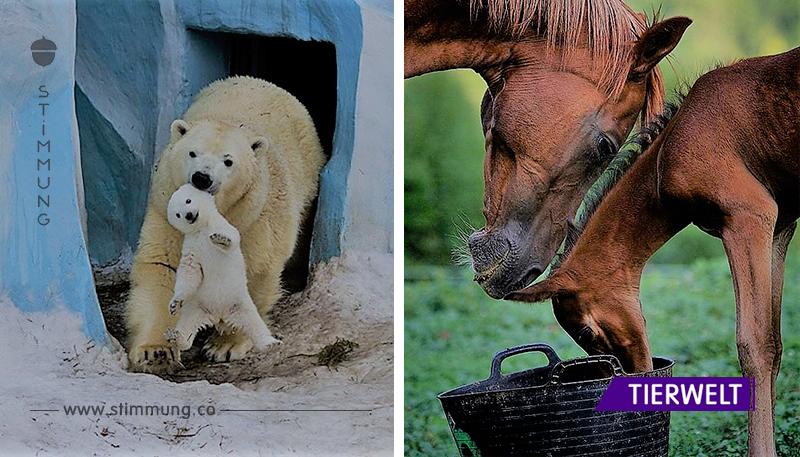 Eine Auswahl von Bildern, die mütterliche Liebe zeigen.Es ist so süß...