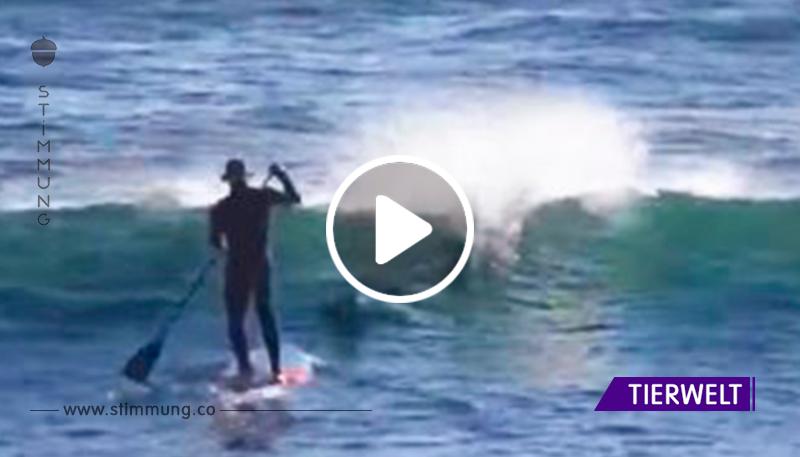 Der Typ ritt auf einem Brett, plötzlich sprang ein Delfin auf ihn. Unvergesslich!