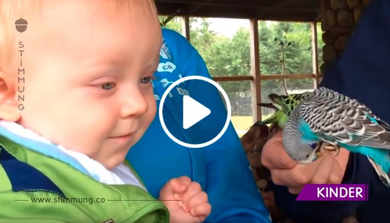 Sehen Sie, wie diese Babys Papageien kennenlernen. So süß!