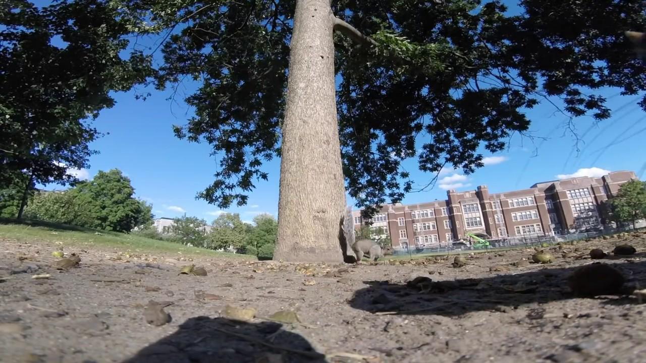 Eichhörnchen stahl GoPro und hat alles auf dem Weg aufgenommen