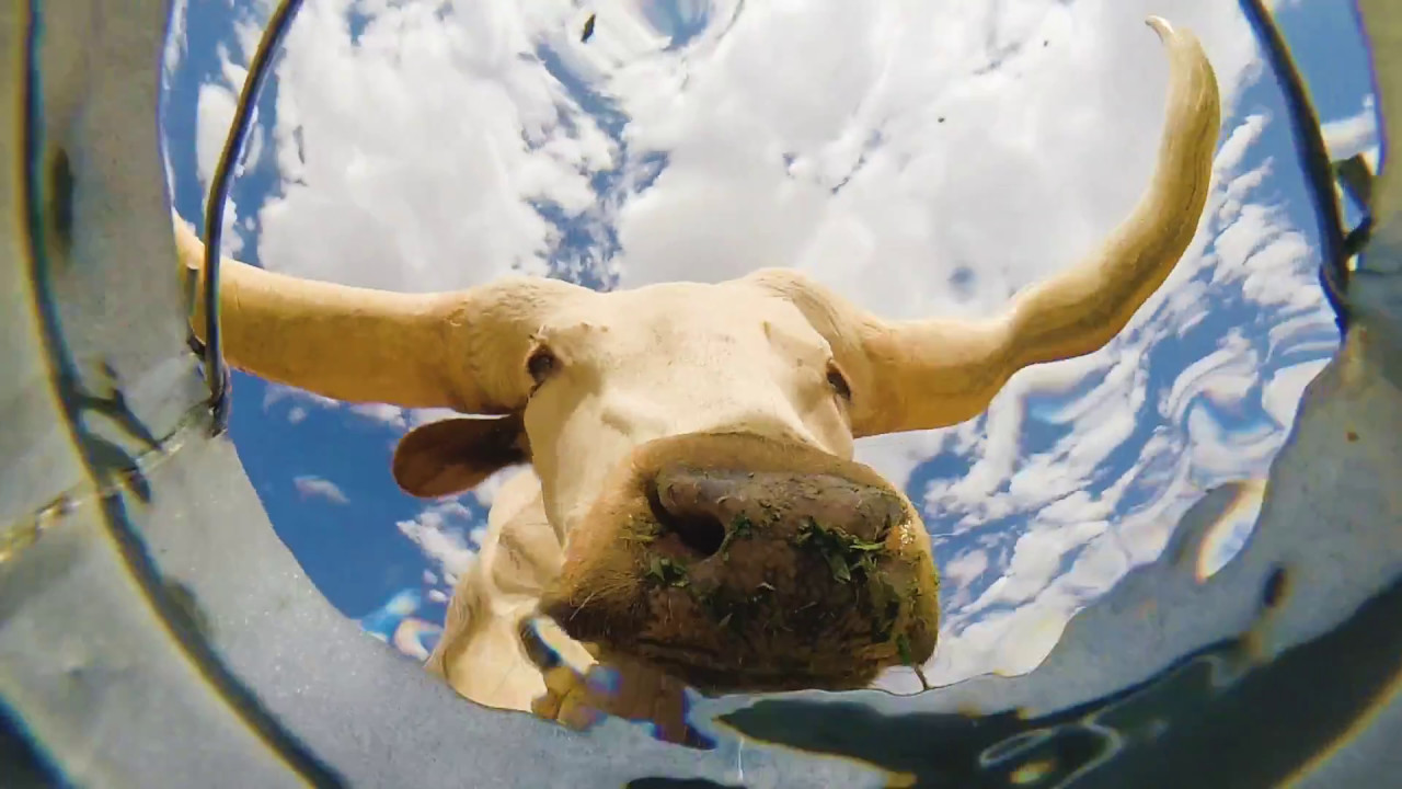 Man hat eine Kamera in einem Eimer mit Wasser mitten in der Wüste installiert. Das ist was daraus geworden ist ...