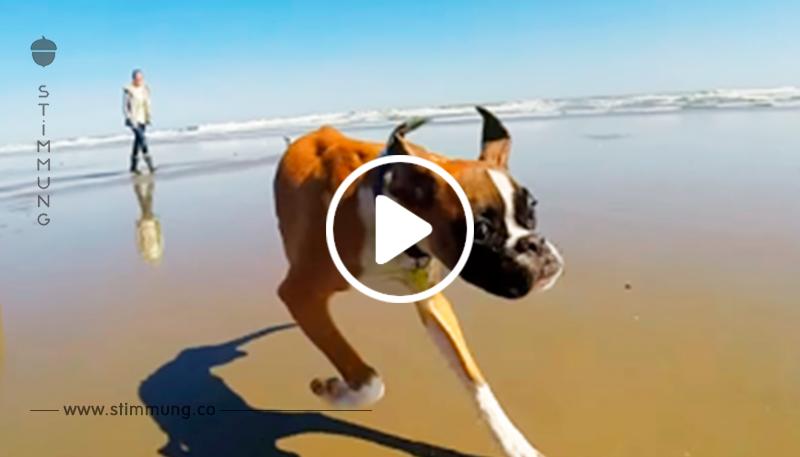 Dieser zweibeinige Hund ist ein echtes Beispiel für alle! Niemals aufgeben!