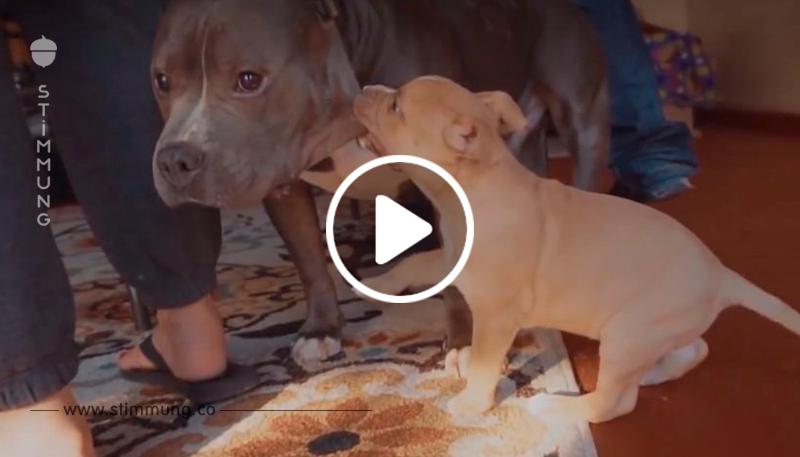 Jeder nannte diesen Hund böse und aggressiv. Trotz der Warnungen wagte ein Typ, ihn aus dem Tierheim zu nehmen