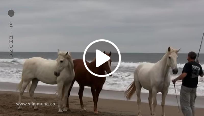 Er führte die Pferde zum Meer. Was als nächstes passiert ist, ist unglaublich!
