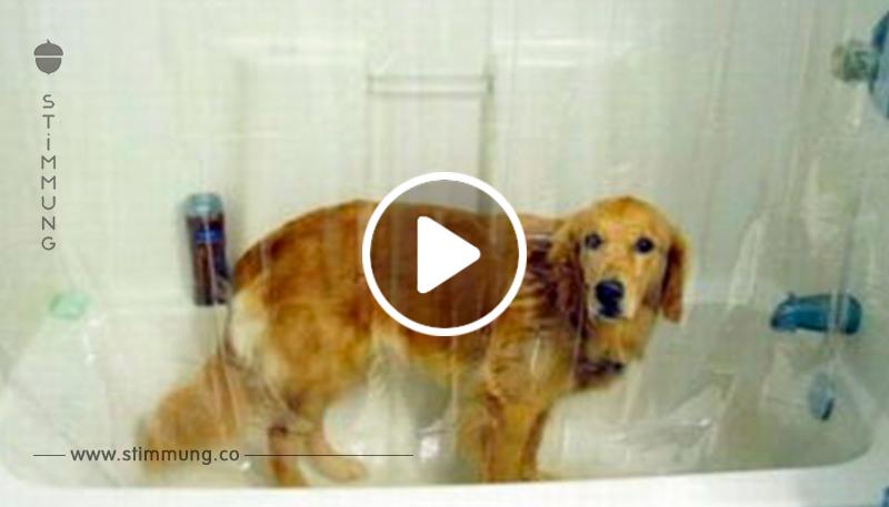 Eine solche Reaktion von Hunden auf Schwimmen hast du noch nicht gesehen!