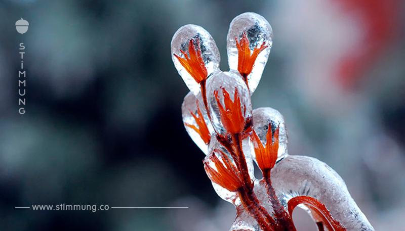 Erstaunliche Eisskulpturen, geschaffen von der Natur