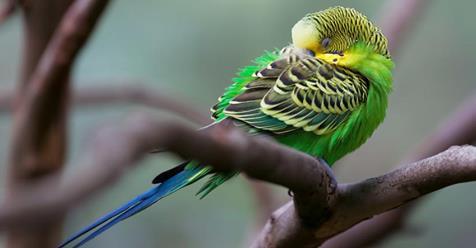 Warum fallen schlafende Vögel nicht vom Ast?