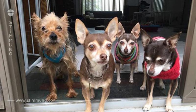 Ein Tierheim kümmert sich um die Haustiere der Krebspatienten, damit sie behandelt werden können, ohne sich von ihren Vierbeinern zu trennen