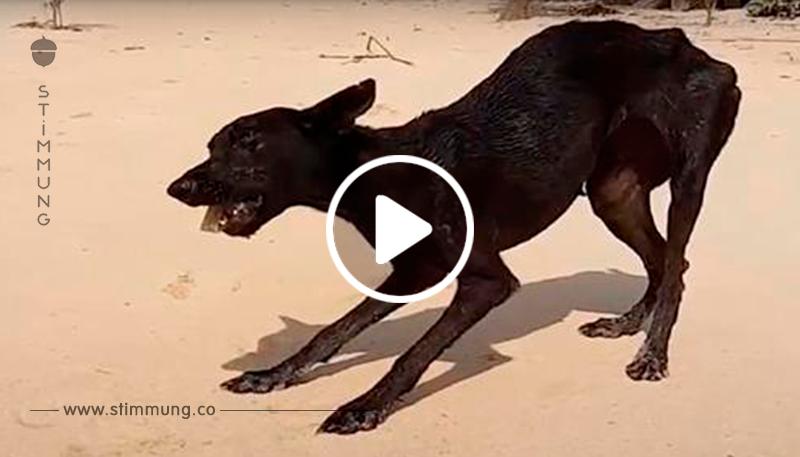Mann auf Kreuzfahrt geht an Insel von Land, sieht sterbenden Hund auf ihn zukommen