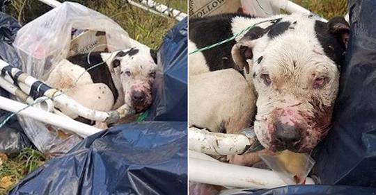 Hund wird an Mülltonne gefesselt und dem Tod überlassen.