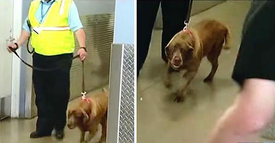 Soldat scheidet aus Dienst und lässt Hund zurück – schau dir ihre emotionale Wiedervereinigung 2 Jahre später an
