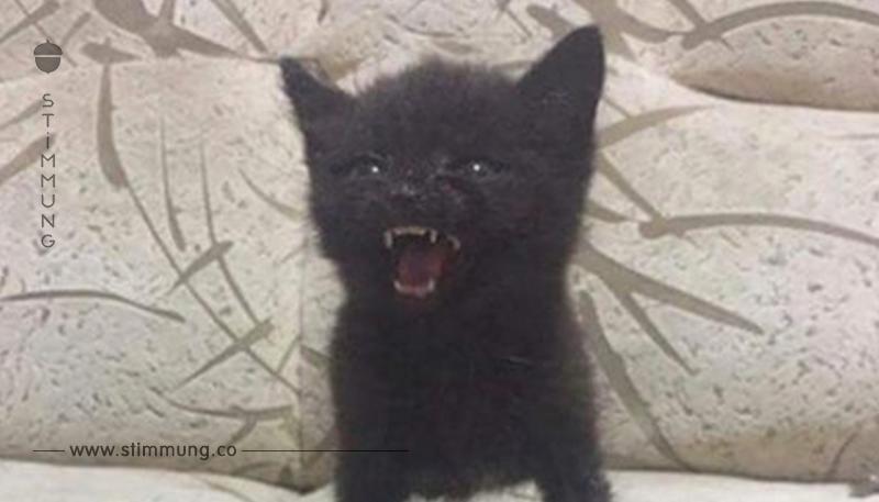 13 wütende Kätzchen, die eher süß als bedrohlich sind.