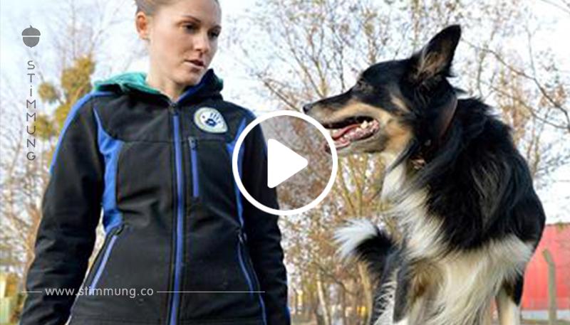 Hundebesitzer aufgepasst: Der Hundeführerschein ist jetzt Pflicht!