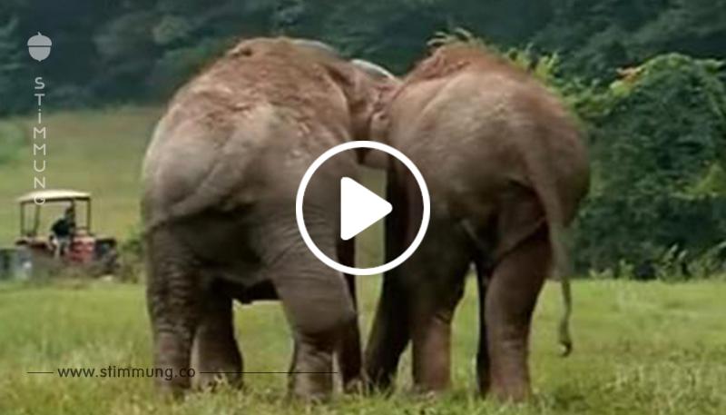Zirkuselefanten sind 22 Jahre getrennt – hier der Moment, als sie sich endlich wiedersehen