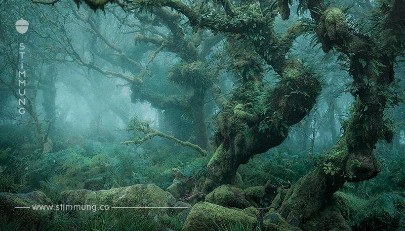Dieser Wald verzaubert nicht nur Märchenfans