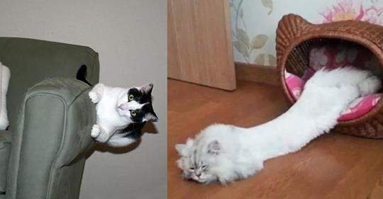 14  Katzen, denen die Regeln der Physik egal sind.