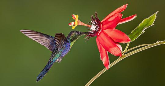 Das erstaunliche Leben der Kolibris