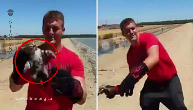 Teenager wird gefilmt, wie er ein Kätzchen in einen See wirft, als die Polizei eintrifft, sorgen sie für Gerechtigkeit
