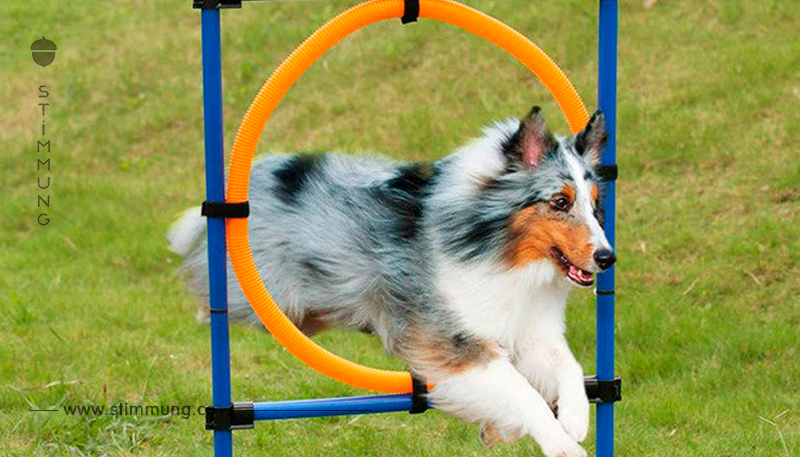 AGILITY TRAINING: AB IN DEN PARCOURS