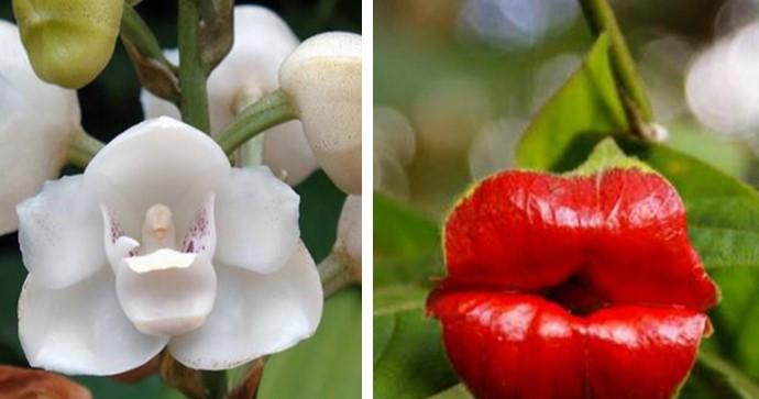 15 Blumen, die aussehen wie etwas ganz anderes.