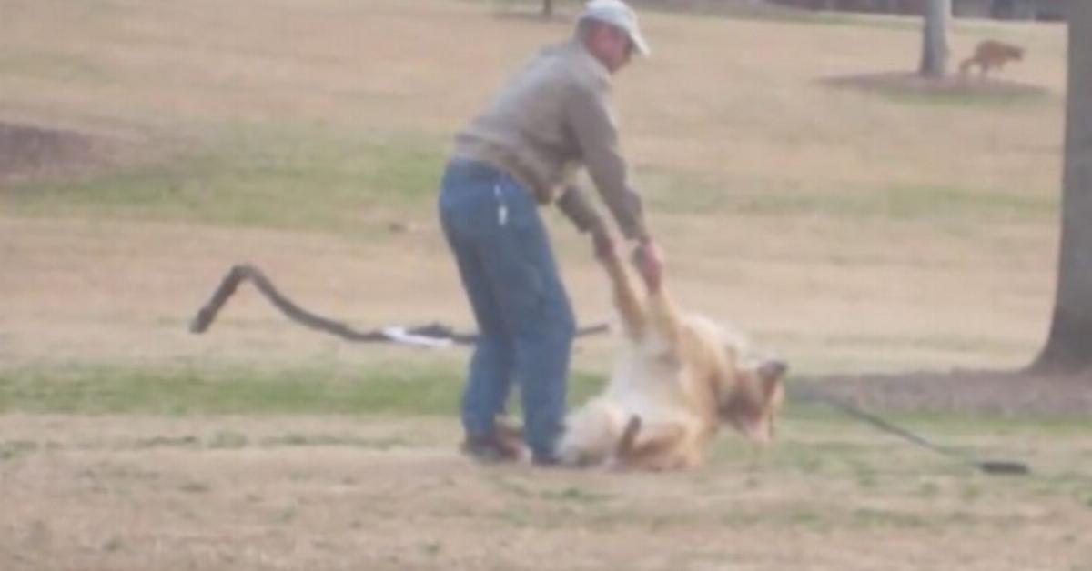 Mann bemüht sich vergeblich, seinen Hund zum Heimweg zu bewegen.