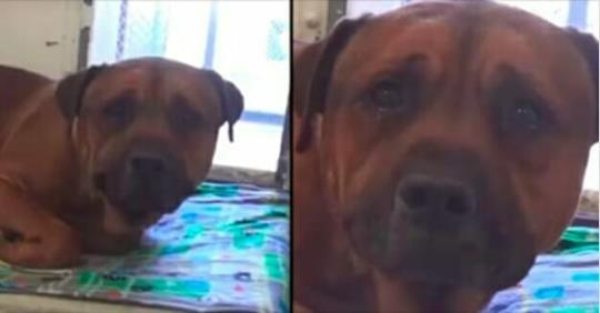 Trauriger Hund kann nicht aufhören zu weinen, als er merkt, dass er zurückgelassen wurde