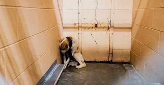 Vernachlässigter Hund im Tierheim kauert in der Ecke seines Zwingers, zu verängstigt um irgendjemand in ihn ranzulassen