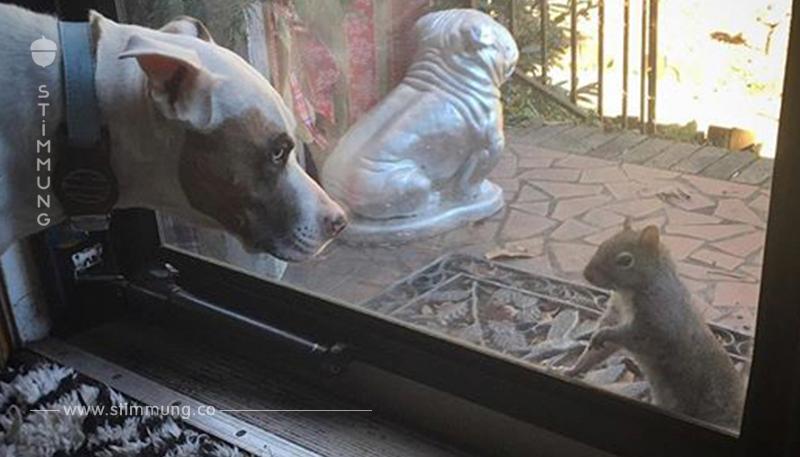 Eichhörnchen klopft täglich bei Familie an Fenster: 8 Jahre später wird ihnen klar warum