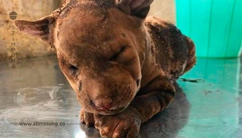 4 Welpen bei lebendigem Leibe verbrannt – während Mutter hilflos zusehen musste