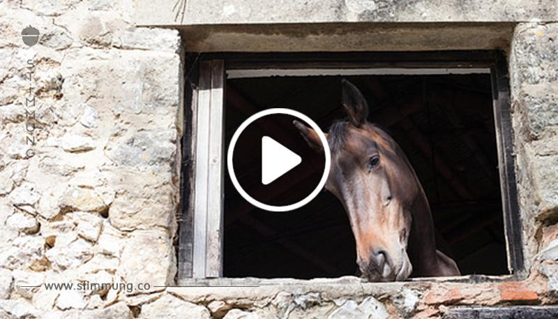 Überwachungsvideo filmt Pferd bei Eskapaden.
