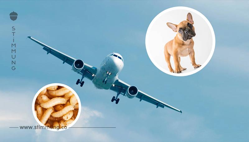 7 krasse Fälle, in denen Flugzeuge auf der Strecke umkehren mussten
