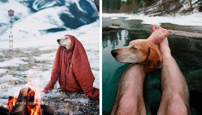 So schön kann es sein, mit Hunden zu verreisen