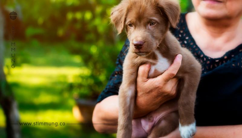 Wir stellen vor – Cinnamon: Der Hund mit der einzigartigen Ohrform, der zu einem Internet Star wurde