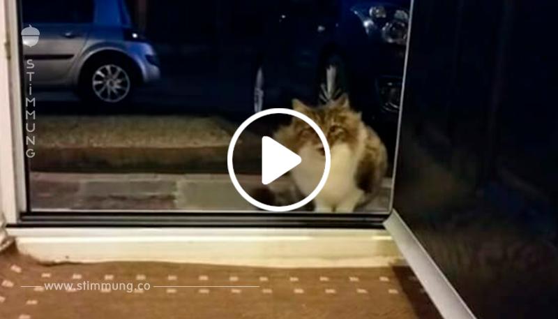 Heimatlose Katze bettelt, ins Haus kommen zu dürfen, dann bemerkt der Besitzer, dass sie nicht alleine ist