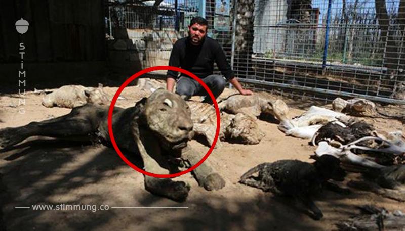 Tragisch: Nur 2 Tiere können aus irakischem Zoo gerettet werden.