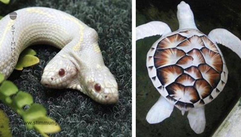 20 Bilder von seltenen Albino Tieren.