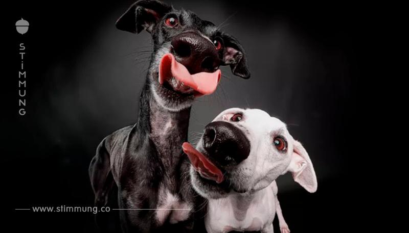 Warum in Spanien jedes Jahr Tausende Jagdhunde im Namen der Tradition sterben müssen