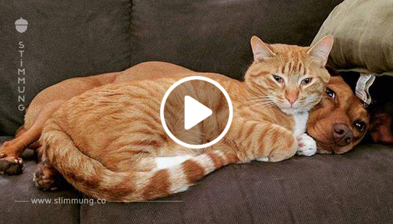 Kamera nimmt den Moment auf, in dem eine Katze einen verängstigten, geretteten Hund beruhigt, während Mama weg ist