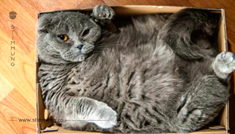 17 Katzen akzeptieren nicht, dass der Karton zu klein ist.